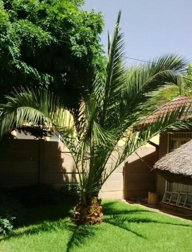 3 m Palm Tree for Sale