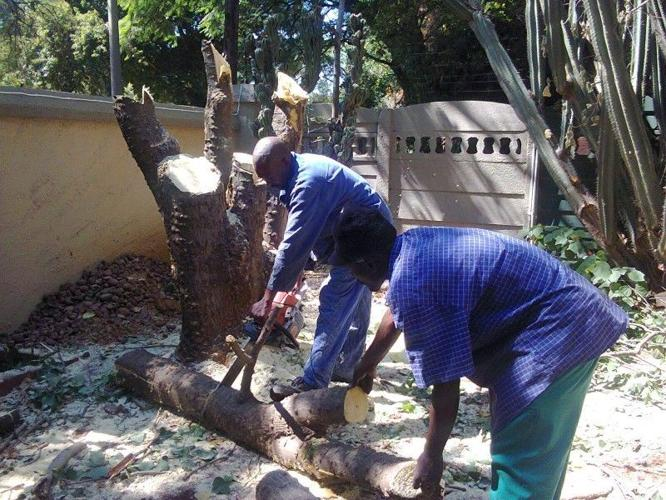 DnD Tree Felling and Site clearing 0734421108