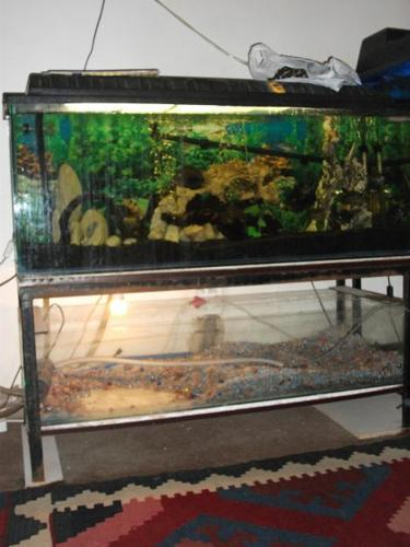 Double fish tank for price of 1 for sale in johannesburg for Double fish tank