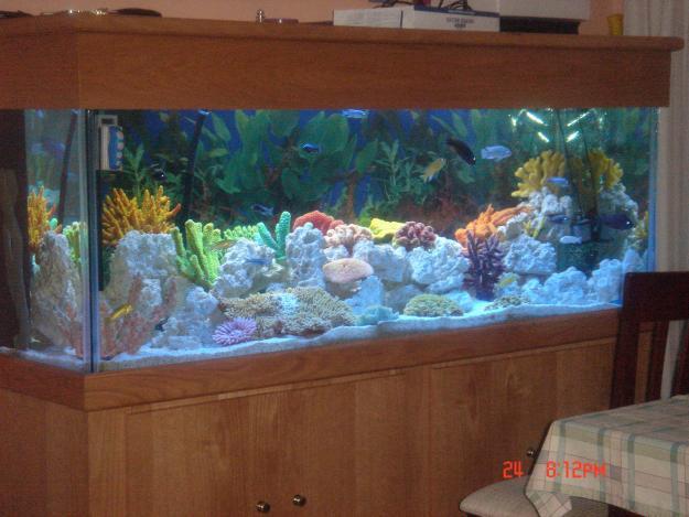 200+Gallon+Fish+Tank+Sale Lindy Yeartas blog: 200 Gallon Fish Tank ...