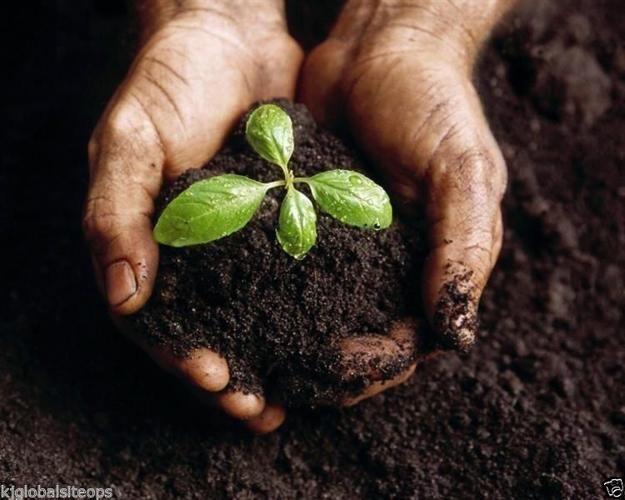 Fresh Organic Compost for sale per bakkie load