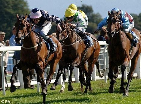 Horse Racing Tipster.
