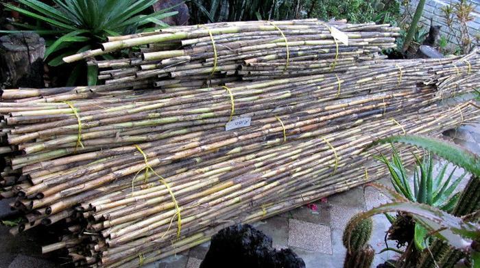 Spanish Reeds
