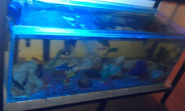 fish tanks for sale cape town archive boyu ea fish tank for sale cape town co za 2017