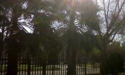 2 Palm Trees 5-6 metres Removal and fetch on own cost