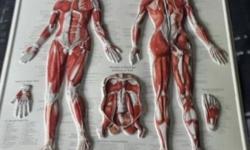 medical corset in vanderbijlpark gauteng classified