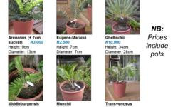 See photos for types of cycads, sizes and prices. More