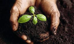 Compost: Our compost is an organic decomposition of