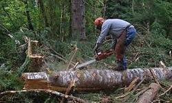 We specialize on: Tree felling Site clearing, Bush