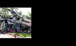 Fully insured tree felling, landscaping, site clearing,
