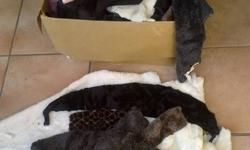 1) A box full of faux fur off trimmings. Various