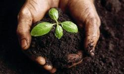 Fresh Organic Compost for sale R25 per 20kg bag | R550