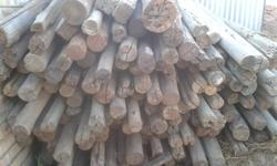 gum poles for sale - used in building of houses 185