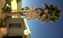 Palm Tree +- 10yrs old for sale!Good Condition,removal