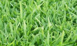 We supply instant lawn & lawndressing, We specialize