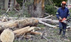 Randburg Tree Felling � Tree Felling � Tree Trimming �