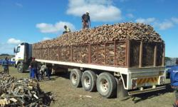 Meulvlei Farm Rooikrans Firewood Larger than large deal