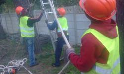 TREE FELLING SERVICES DONE WITH ETRA CARE TO MEET
