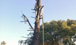 We do Tree felling, Site clearance, Palm tree cleaning,