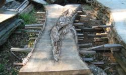tree slices perfect for bar tops or rough benches sizes