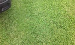 We are expert supplies of best top quality instant lawn