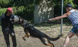 We have fully trained personal protection and guard