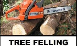 Insured Tree Felling services, professional and