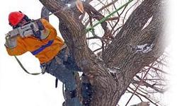 We offer tree felling services around Randburg,