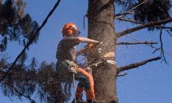 We offer tree felling services at affordable prices.
